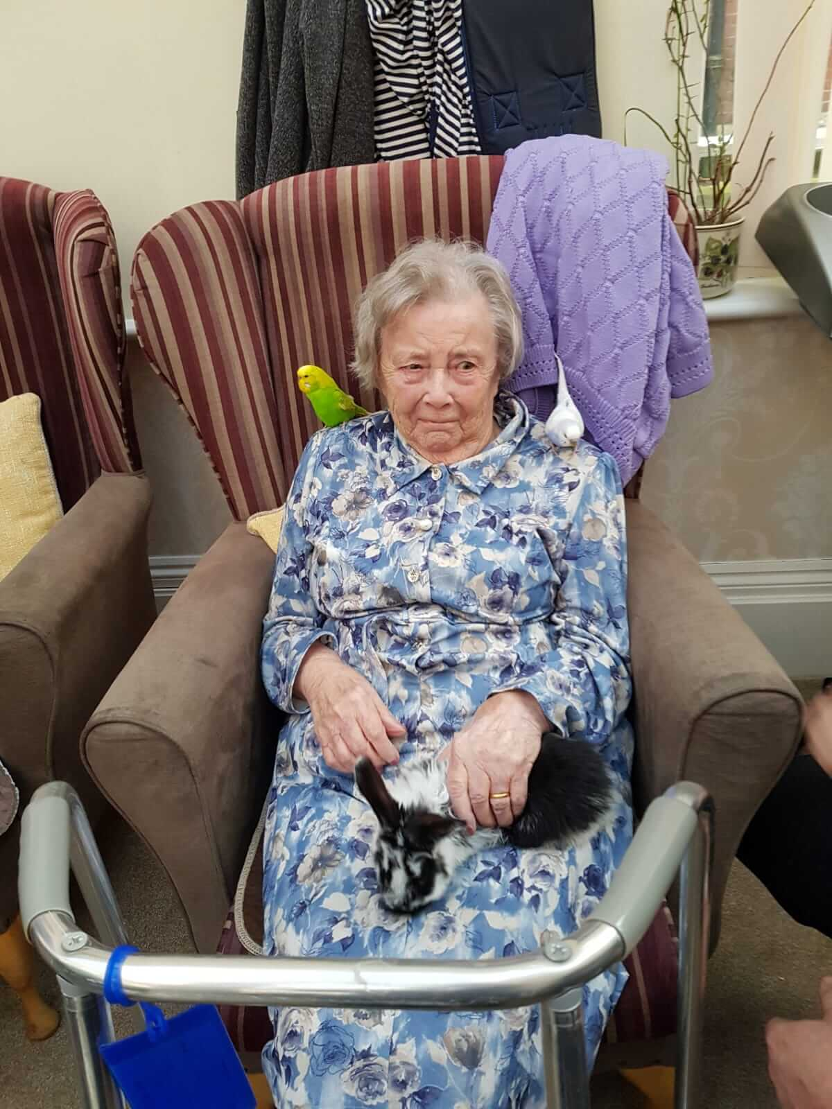 pet therapy in care home in Essex